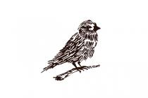 Hand Drawn Sparrow...